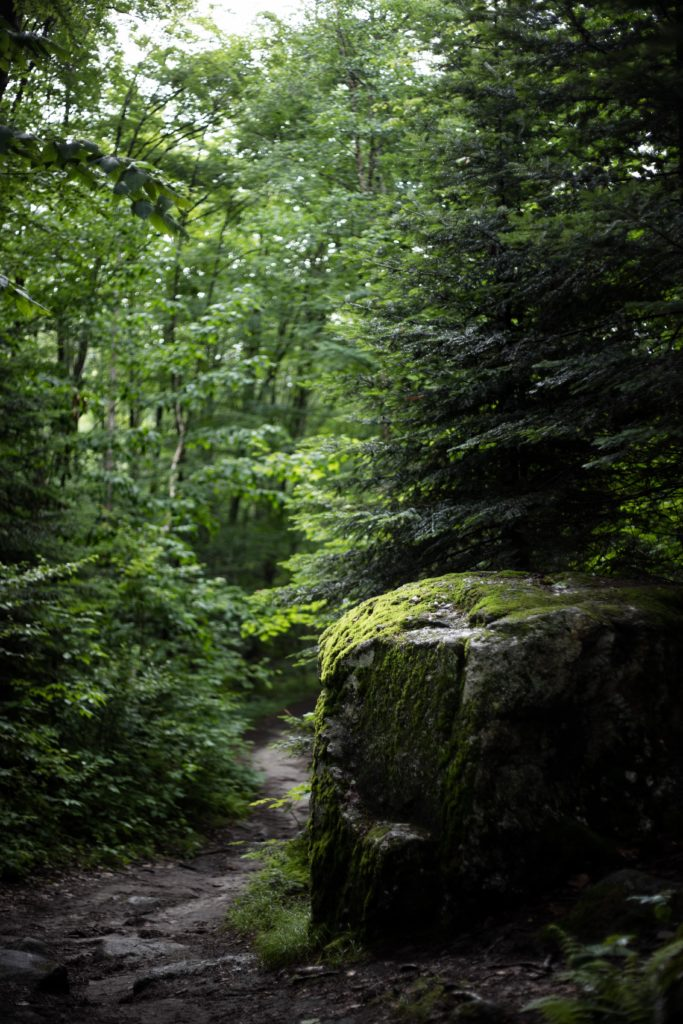 forest with lush greenery and mossy rock